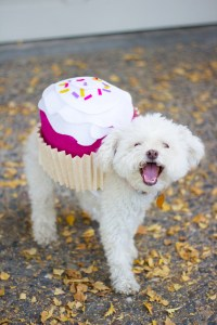 7 Funny And Cute DIY Halloween Dog Costumes - Styleoholic