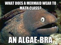 Cute Algae Wallpaper Bad Joke Eel Know Your Meme