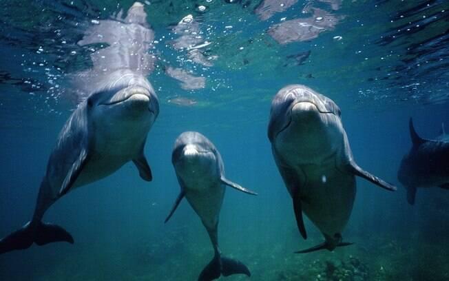 Google Wallpaper Hd Golfinhos Podem Enxergar Fetos Na Barriga De Mulheres