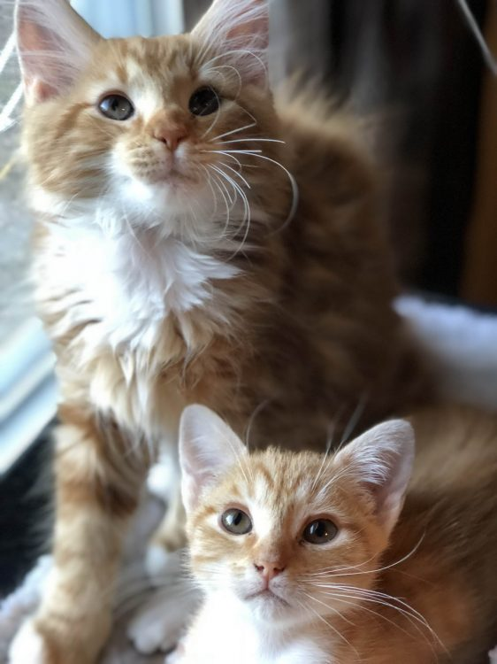 Cute Kittens looking up