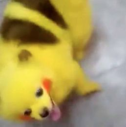 Pokemon lover dyes dog to look like Pikachu