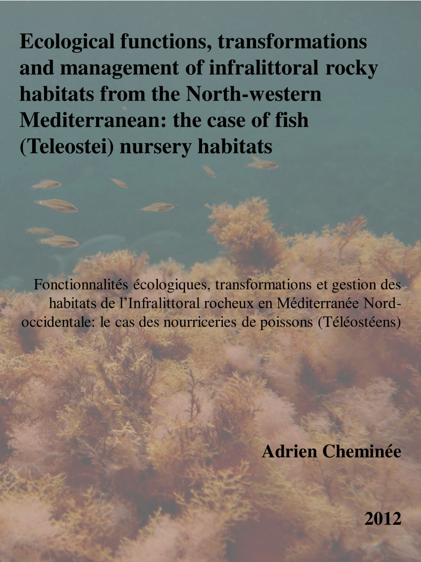 Cheminées Caillaux Relationships Between Fish Sea Urchins And Macroalgae The