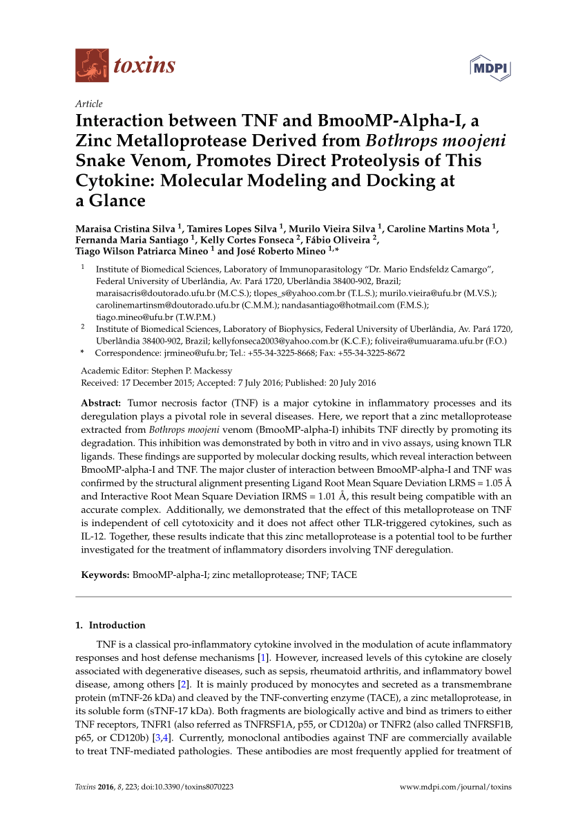 Vvv Bon Bruna Pdf Bmoo Fibmp I A New Fibrinogenolytic Metalloproteinase From