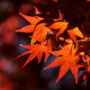 Songs for Autumn: No. 1, Prelude