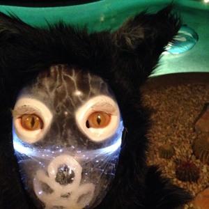 Galantis Sea Fox Mask