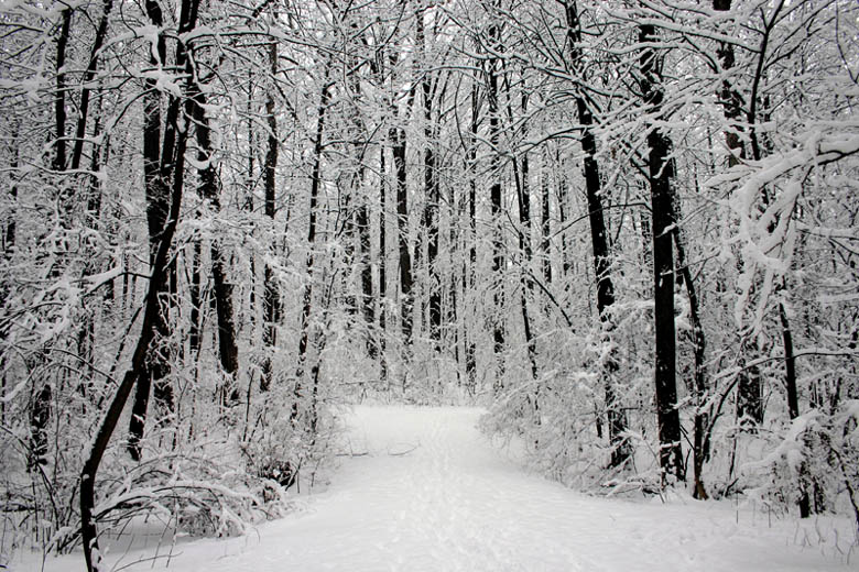 Free Christmas Falling Snow Wallpaper Snow Covered Forest A Photo From Maryland South Trekearth