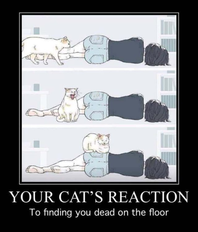 your cats Reaction