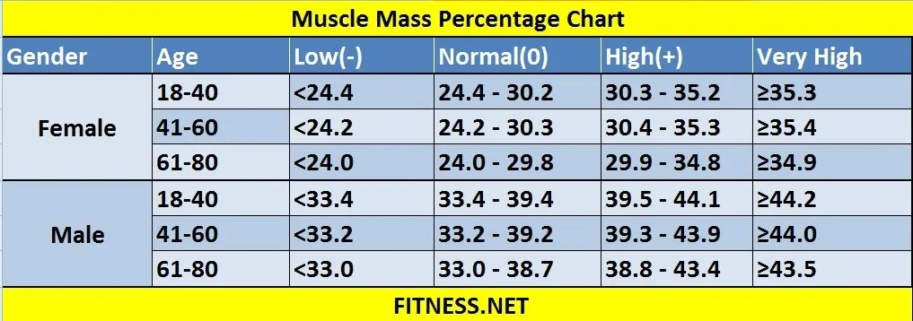 Everything about muscle mass percentage with charts - FITNESS SPORTS