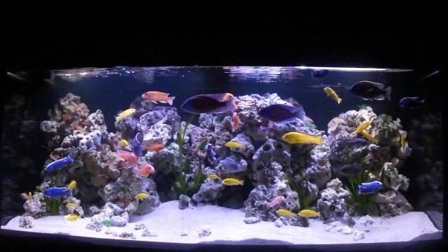 Aquarium Hornig Patrick   YouTube