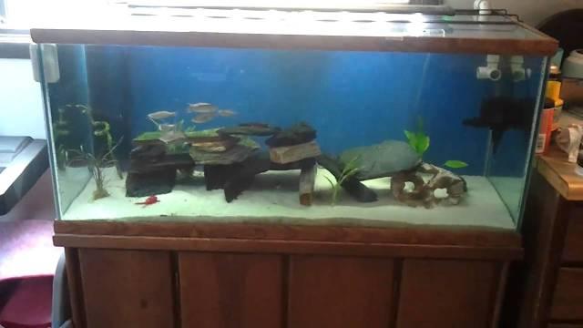 75 Gallon Freshwater Aquarium   YouTube
