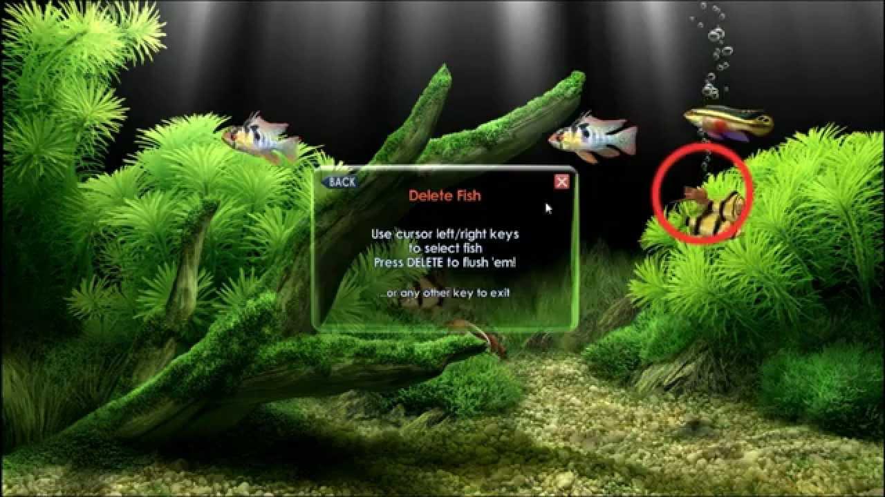 Desktop Aquarium 3d Live Wallpaper For Windows 7 Descargar Protector De Pantalla De Peces Dreamaquarium