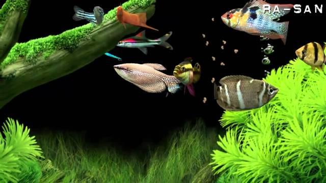 Dream Aquarium screensaver [HD]   YouTube