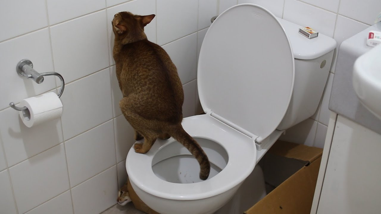Why Do Older Cats Poop Outside The Litter Box Grey
