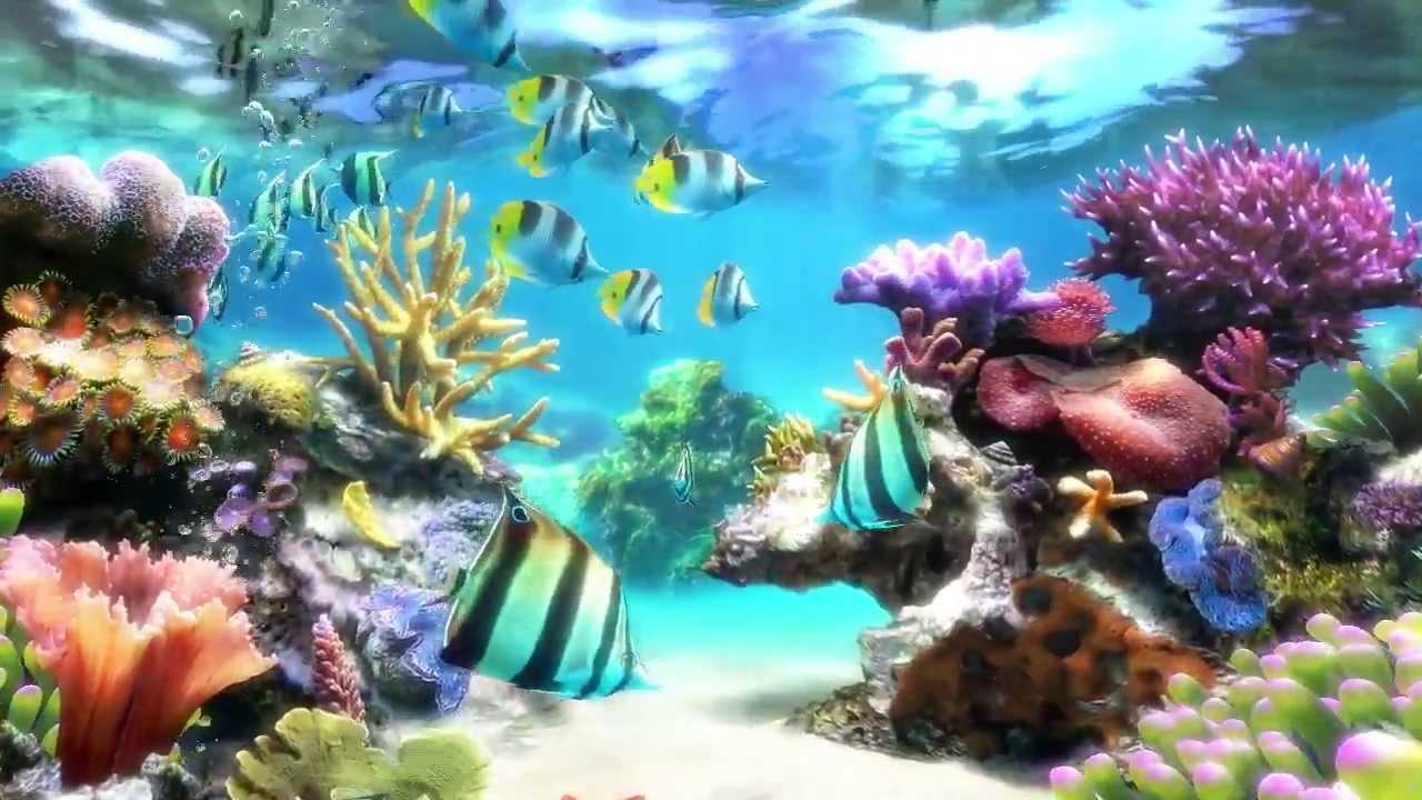 3d Aquarium Wallpaper For Windows 7 Sim Aquarium Screensaver Amp Live Wallpaper Youtube