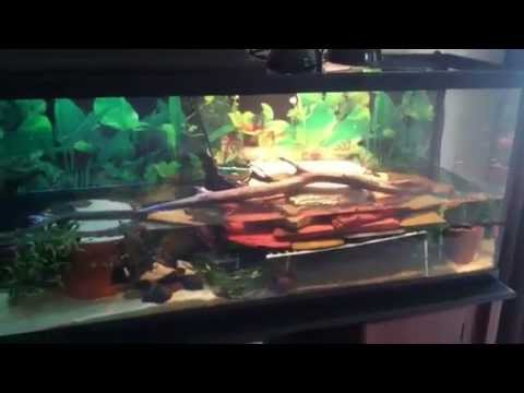 * Turtle Habitat for a 55 Gallon Tank   Hatchling & Juvenile Turtles