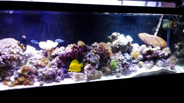 40 gallon long aquarium saltwater reef fish tank   YouTube