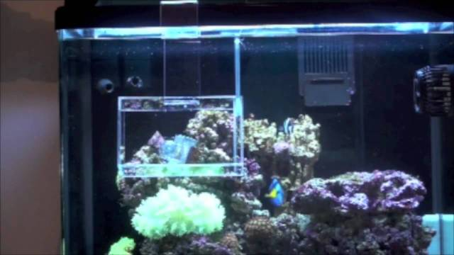 Fish aquarium video youtube discus fish tank youtube for Aquarium fish trap