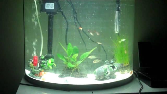 Jebo R760 62 liter tropical aquarium setup with blue ram   YouTube