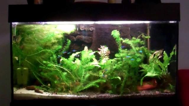 30 gallon community freshwater aquarium   YouTube
