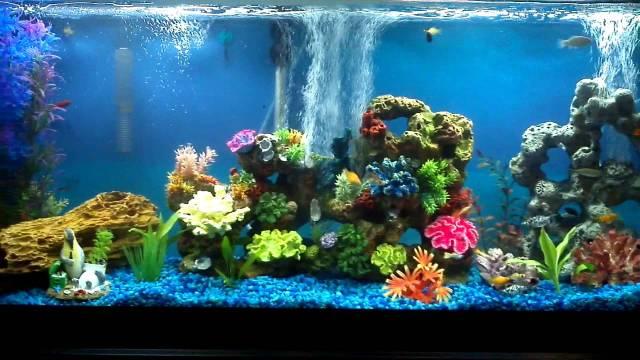 55 Gallon Freshwater Community Aquarium 30 Fish   YouTube