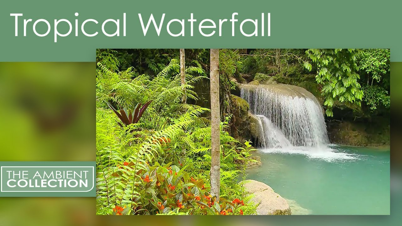 Free Fall Themed Desktop Wallpaper Relaxing Tropical Waterfall Dvd With Jungle Nature Sounds