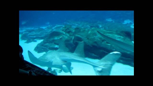 Atlanta Aquarium   YouTube