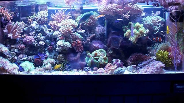 Most Simple Reef Tank (75 Gallon)   YouTube