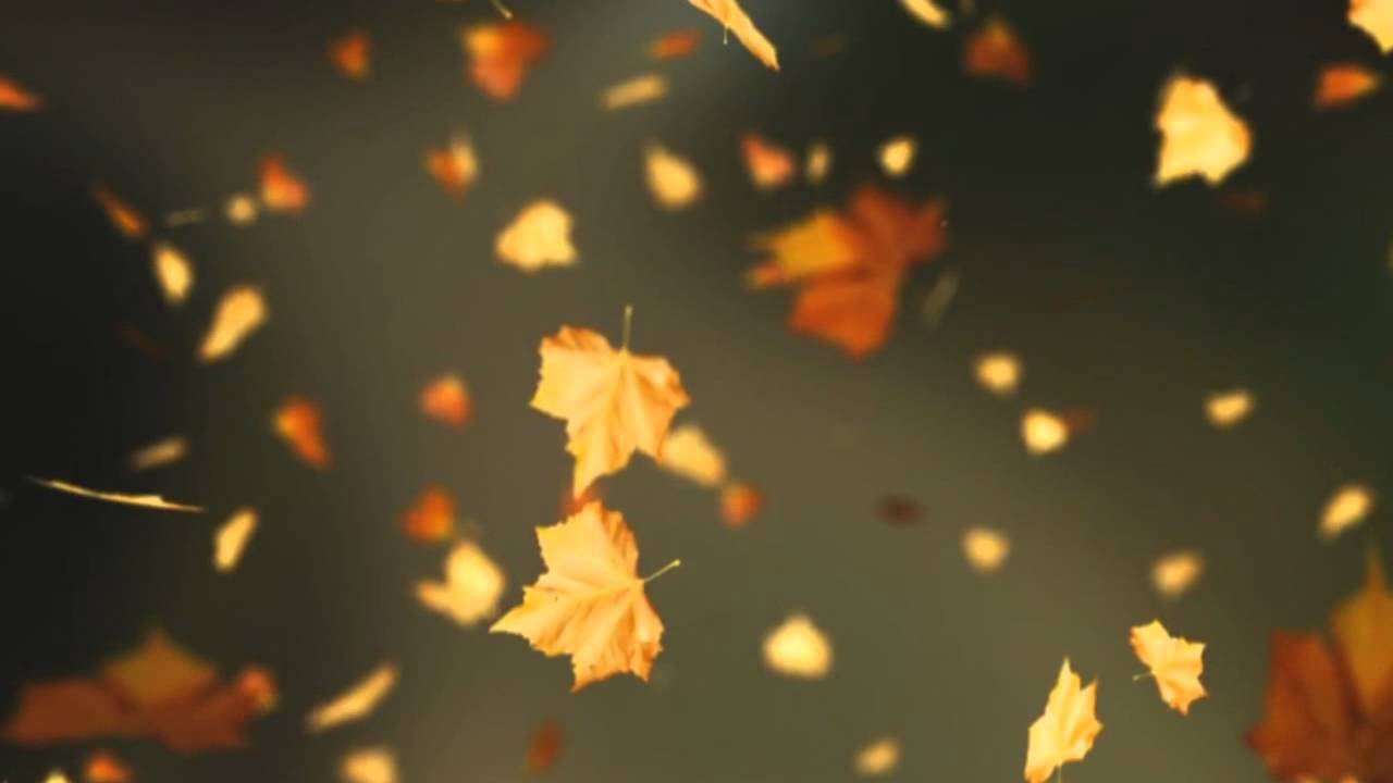 Animated Falling Leaves Wallpaper Falling Autumn Leaves Background Loop 2 Read Desc Youtube