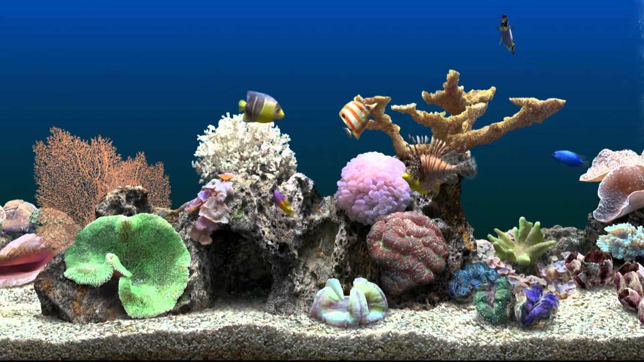Interactive 3d Aquarium Live Wallpaper Marine Aquarium Virtual Fishtank Youtube