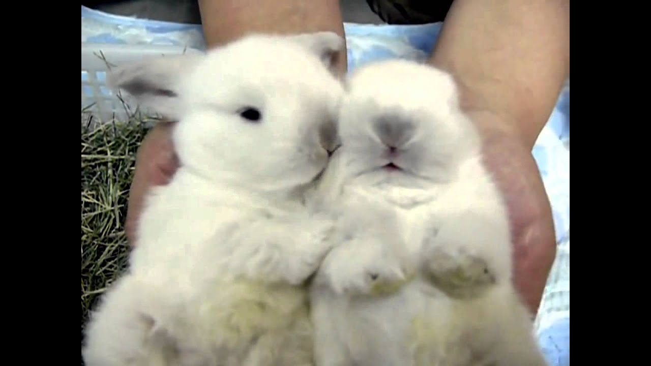 Small Cute Baby Kissing Wallpaper Cute White Baby Bunnies Cleaning Little Paws Youtube