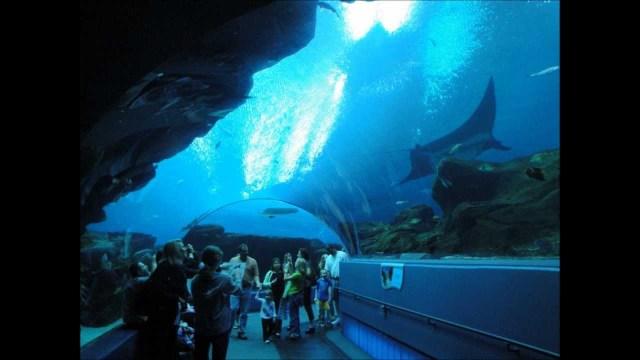 Georgia Aquarium   YouTube
