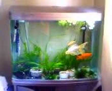 New 40 gallon bowfront goldfish tank   YouTube