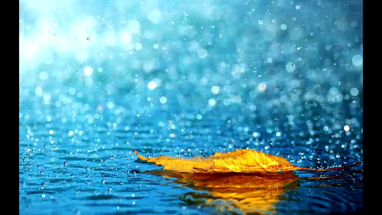 Falling Leaves In Water Live Wallpaper Gentle Rain 10 Hours High Quality Youtube