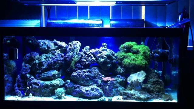 40 gallon breeder reef aquarium update 2. July 15, 2012   YouTube