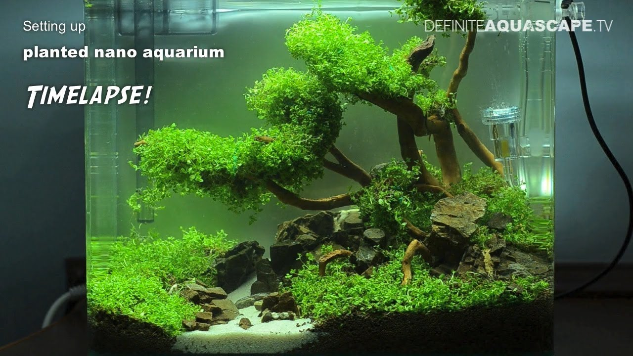 Aquarium Inrichting Voorbeelden Setting Up Planted Nano Aquarium - Timelapse - Youtube