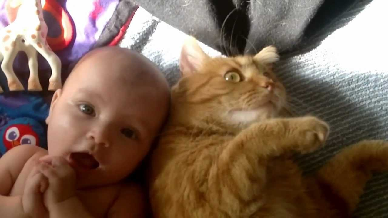 Baby Greifen Cat Attacks Baby - With Love - Youtube