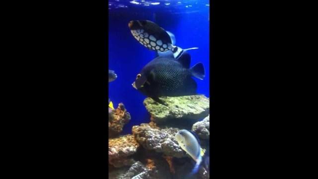 saltwater fish tank   YouTube