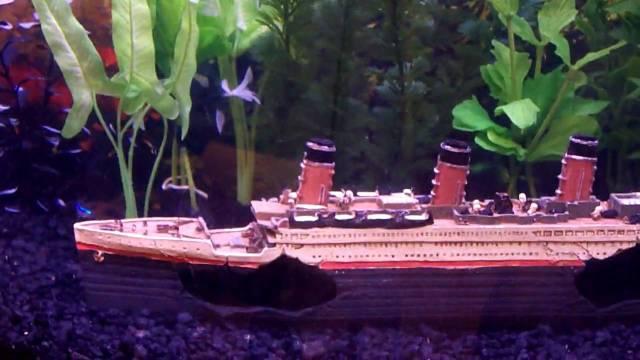 Freshwater Aquarium Titanic Ship Fish Tank   YouTube