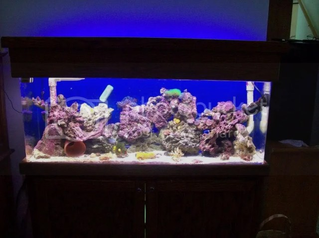 Saltwater aquarium 60 gallon re fishy people share for 60 gallon fish tank