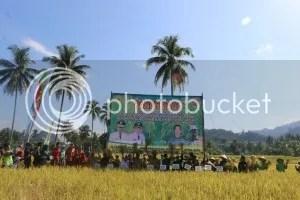 Panen raya padi april di jaro photo PANEN RAYA PADI APRIL_zpsw07kvdfp.jpg
