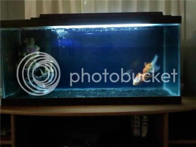 My Fish Tank Need Ideas Tropical Fish Keeping