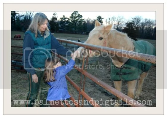 Petting Star at the Horse Barn