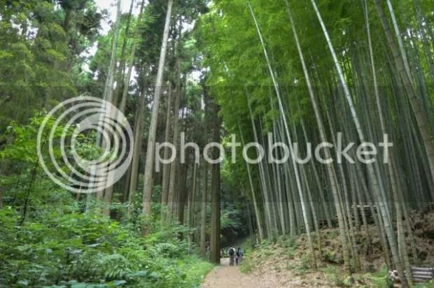 photo Takeo-Shrine-Okusu-1.jpg