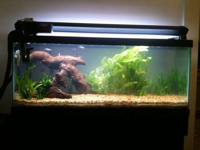 New (to me) 30 gallon long!   Page 11   Aquarium Forum
