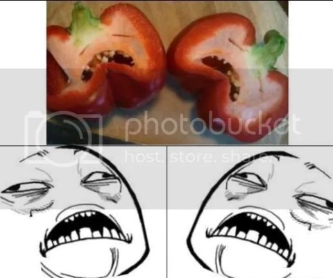 oh my tomato 