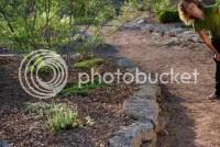 Desert Landscaping for a sloped yard