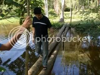 jambatan kelapa, jambatan dari batang kelapa, jambatan dari pokok kelapa, pakok kelapa