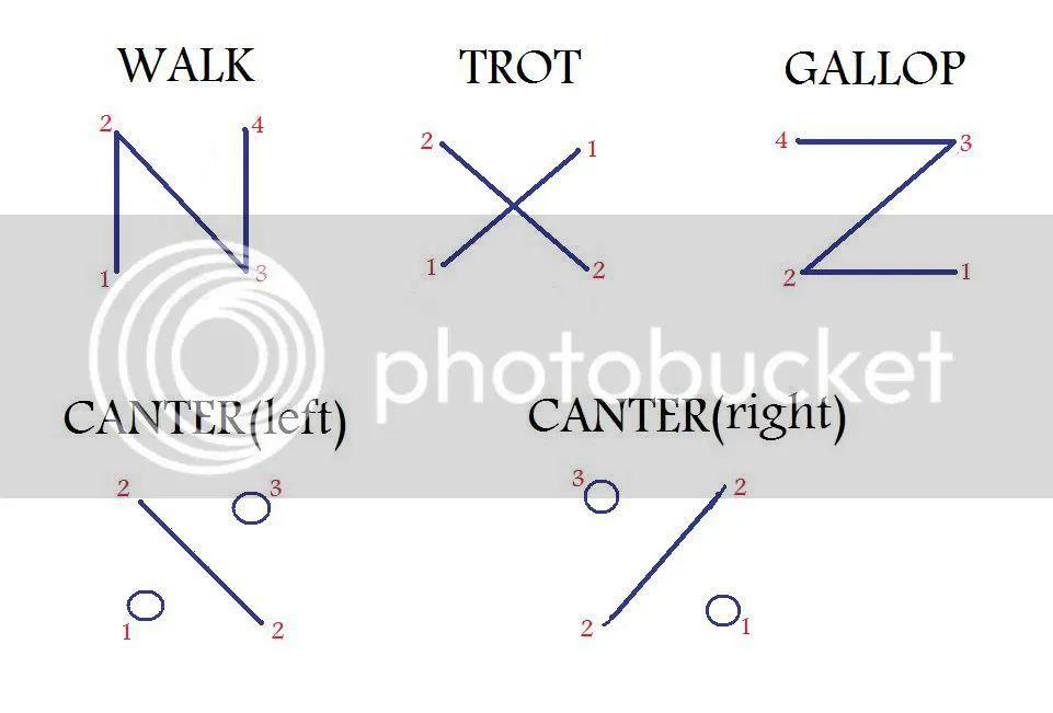 gallop horse gaits diagram