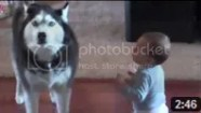 Video Bayi Lucu - Anjing Peniru