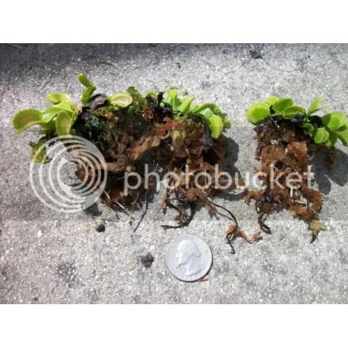 Medium Crop Of Home Depot Peat Moss